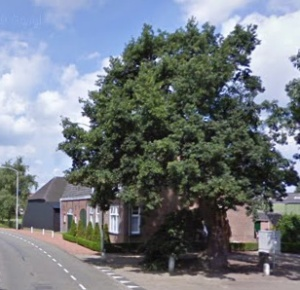 Voor extreem oude bomen moet je niet in Nederland zijn